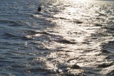 Sunlight On The Water
