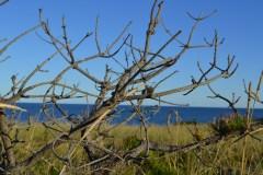 Marconi Beach-Wellfleet, Massachusetts