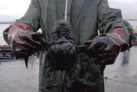 Bird caught in oil spill