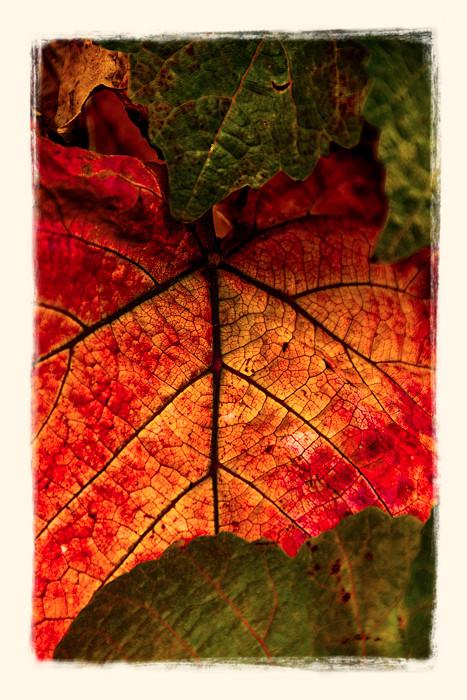 Fall Leaves_DSC3132_