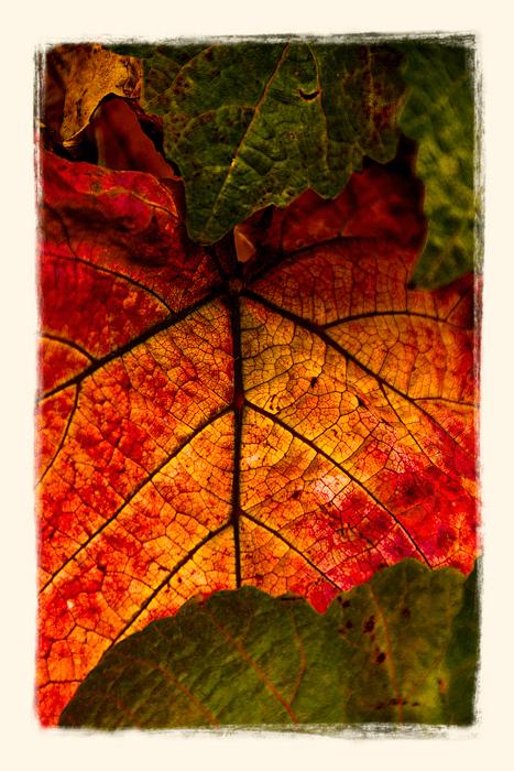 Fall_Leaves_DSC3132___