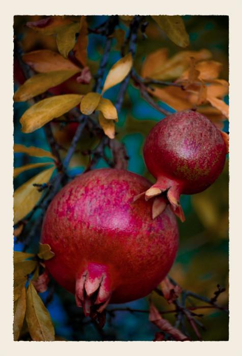 Pomegranates_DSC5520_1_