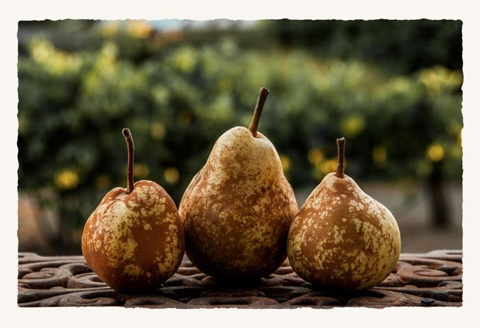 Three Pears_DSC7198_