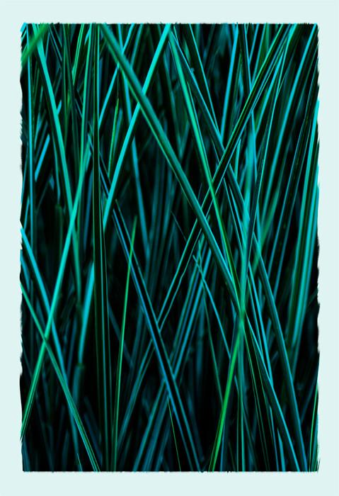 deep greens & bluesDSC_4650_