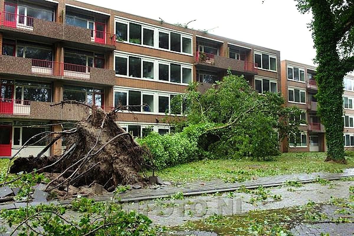 Omgevallen boom op Drs. Bijlweg te Den Helder (DHFoto)