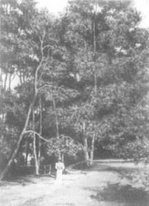 fig. 5 Girl in white walking in a forest clearing, from Georg Klusmann, Vincent van Gogh Unbekannte frühe Werke, Mainburg 1987, p 132