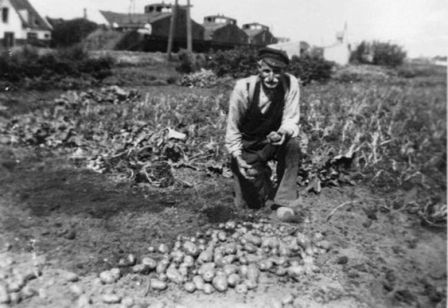 Een Jutter toont zijn aardappelen, de geschutstrein staat op de achtergrond (foto Collectie Jan van Tongeren)
