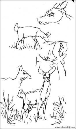 2013-1107-SilverSpringsStPk-Deer-2