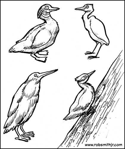 2013-1108-DunnellonBirds