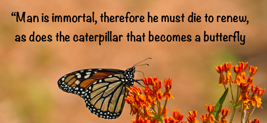 monarch butterfly on flower with quote
