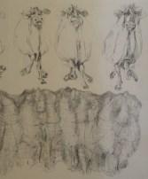 Sketch - William Robinson