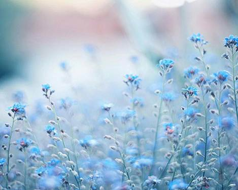 blue-flowers-full-screen-high-quality-wallpaper-pictures-download-flowers-free-images