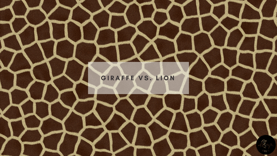 Giraffe vs. Lion