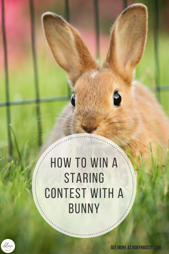 Have you ever had a staring contest? With a bunny? Have you ever wondered how on earth you win a staring contest with a bunny? Well wonder no more.