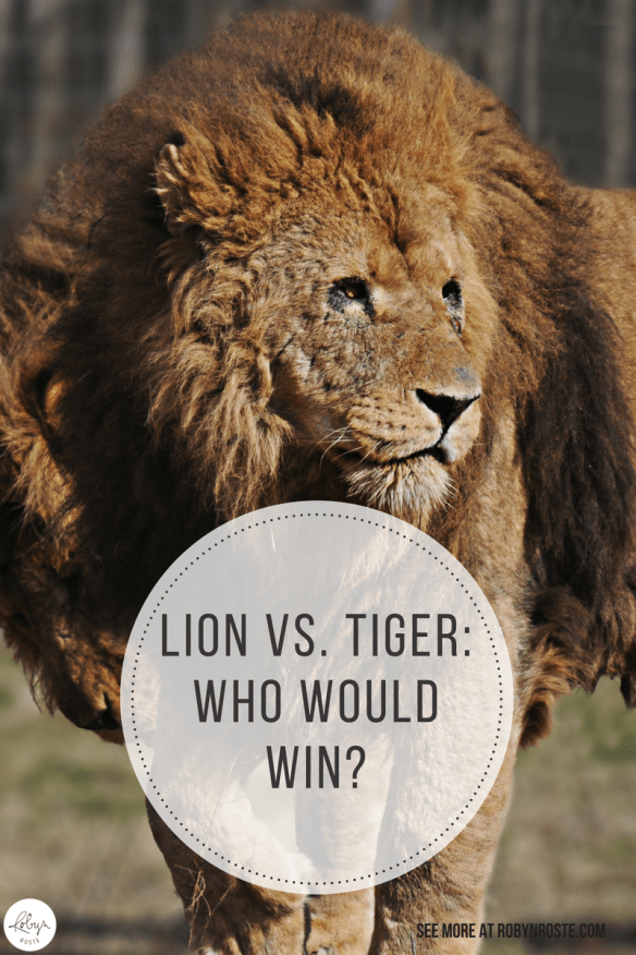 Have you ever wondered who would win in a lion vs. tiger battle? Well today you will wonder no more! I'm here with a scientific answer powered by CGI.