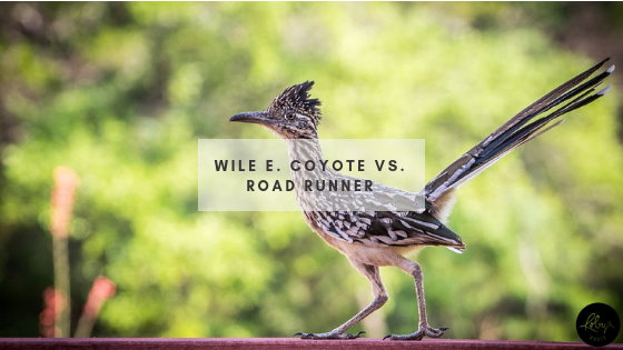 Wile E Coyote vs Road Runner