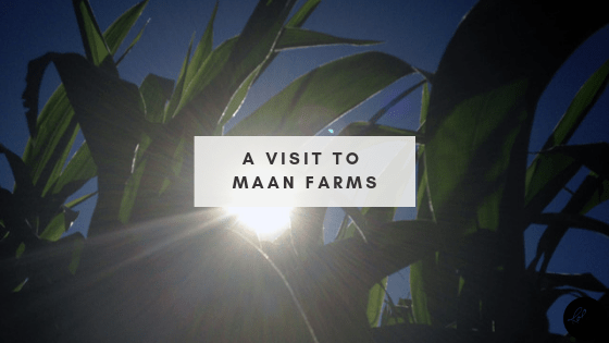 A Visit to Maan Farms