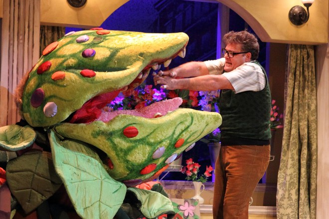 """""""Feed me, Seymour!"""" Little Shop of Horrors's haunting signature line, with Alan Committie as the hapless Seymour. Photograph courtesy Montecasino Theatre."""