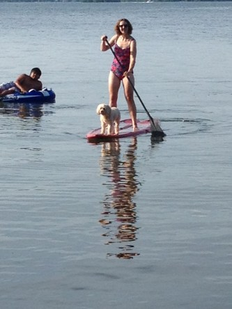 Dog on a paddleboard