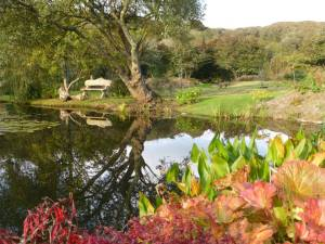 Seat overlooking main pond at Roch Mill Granary Gardens at Roch Mill, Newgale, Pembrokeshire