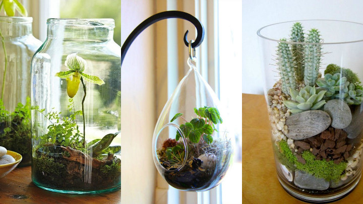 ideas de plantas en botellas de vidrio