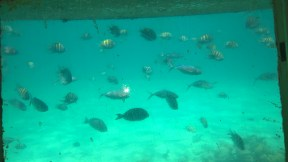 Beautiful views of fish and coral reef
