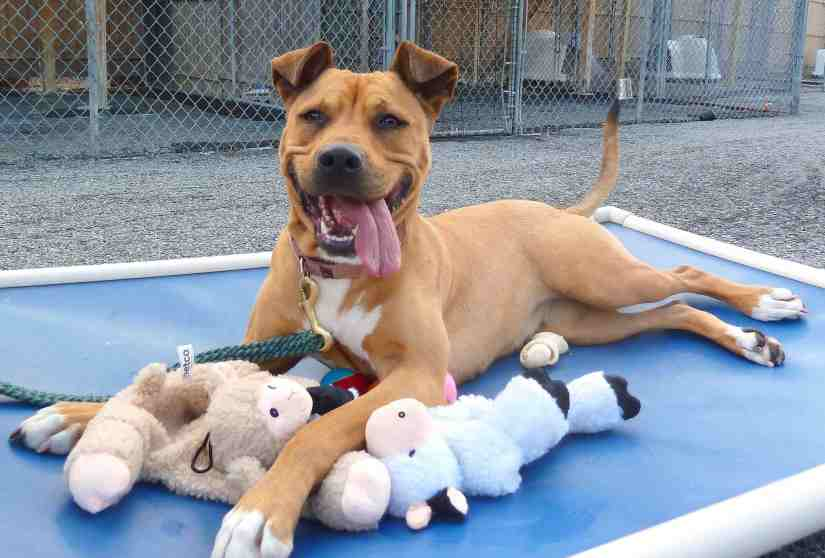 Image result for happy dogs in shelters