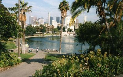 MacArthur Park – Don't Leave Your Cake Out In The Rain