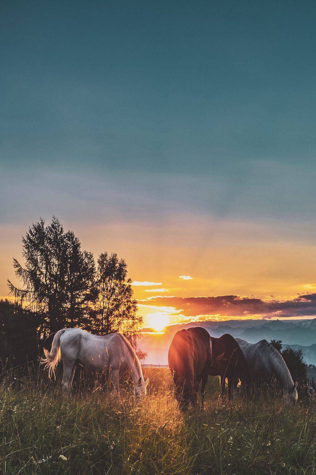 rando-equestre-kirghizstan-rockbeergasoline