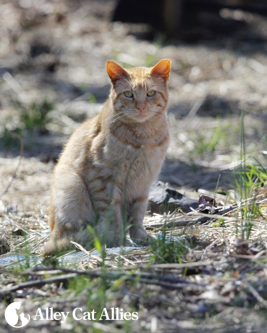 press-201604-cat-outside-woods2-copy