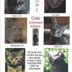 Adoptable cats from Cats Unlimited