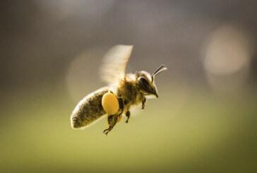 Freezing temperatures cut 2016 honey production