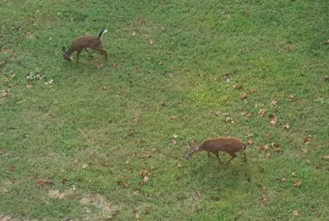 On the hunt for venison donations in Rockbridge County