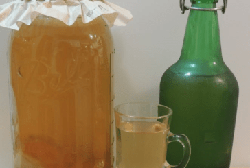 Kombucha brewing in the Blue Ridge