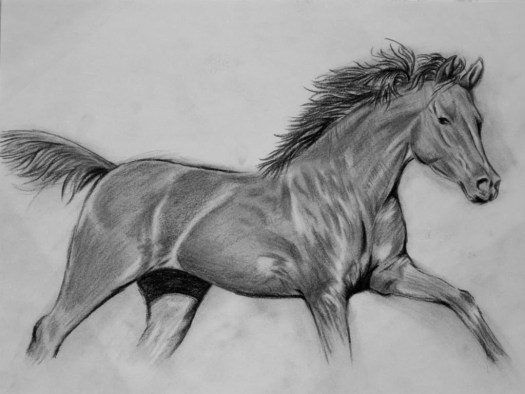 draw a realistic horse