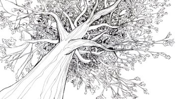 How to draw a 3D tree with Pencil Step by step for beginner & kids Video Tutorial