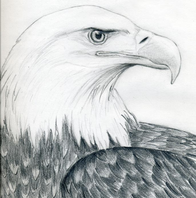 how to draw eagle