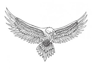 how to draw wings of eagle that are spread
