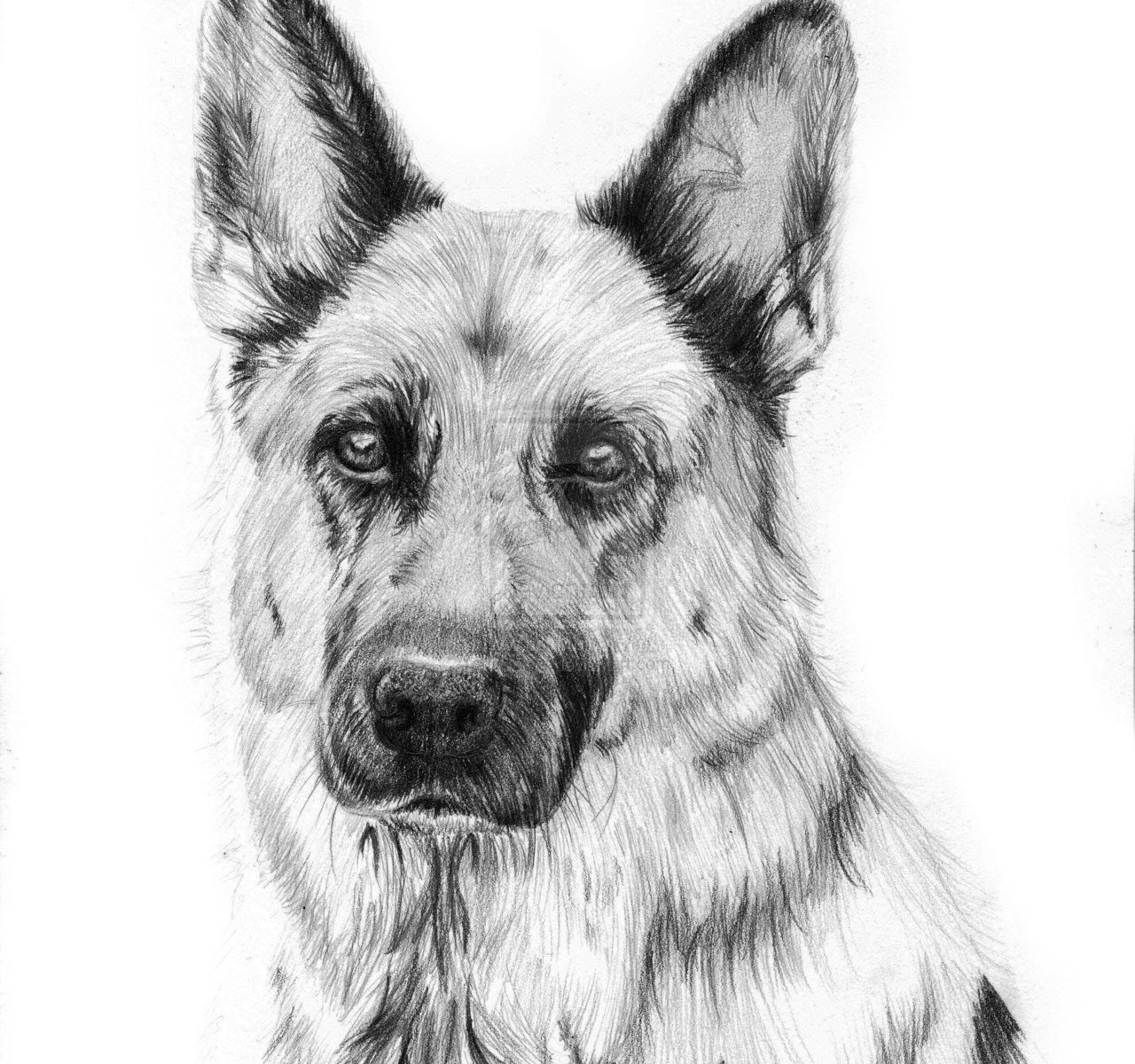 Learn To Draw A German Shepherd Puppy Dog Step By Step Easy For