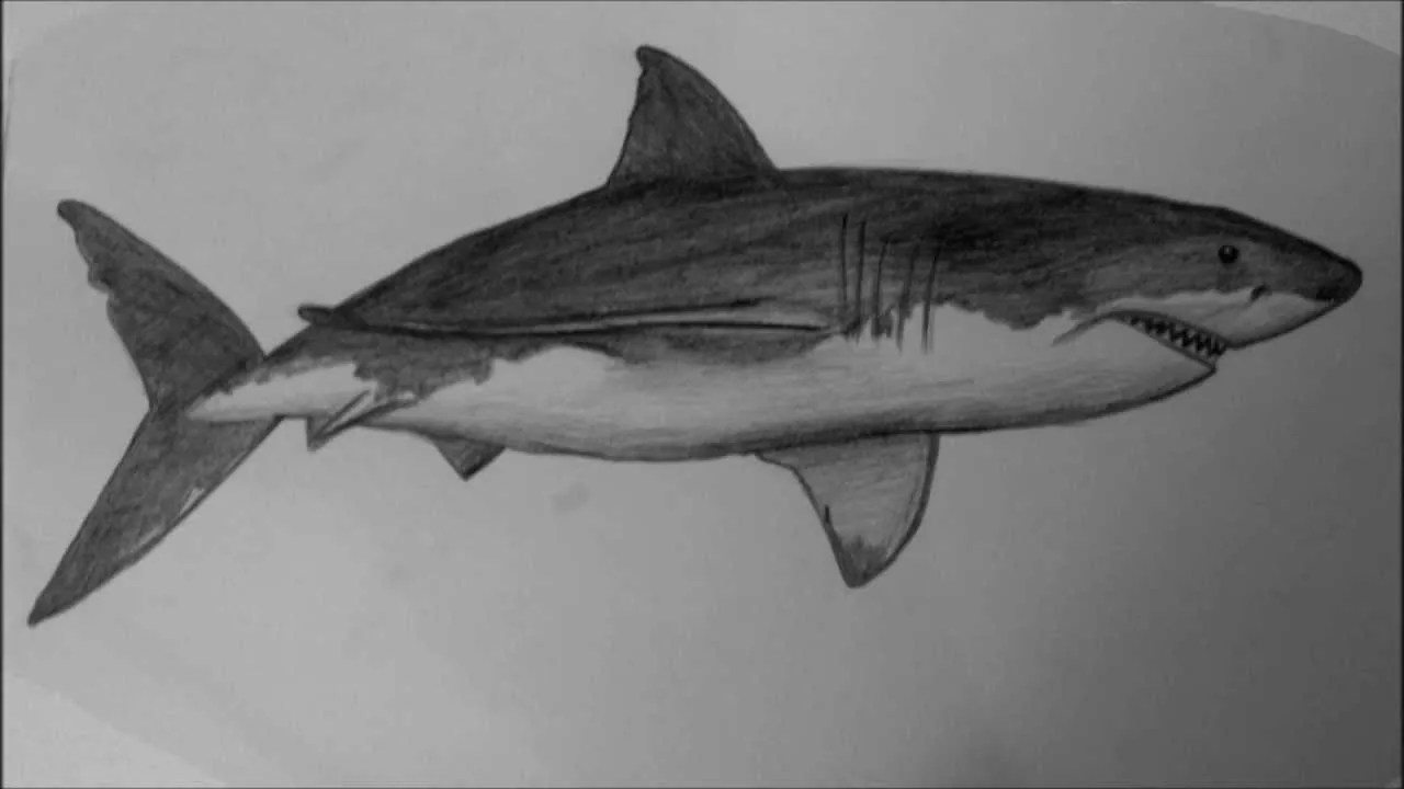 How To Draw A Shark Step By Step Easy Video For Beginners And Kids