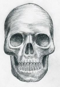 How to draw a skull for beginners steps