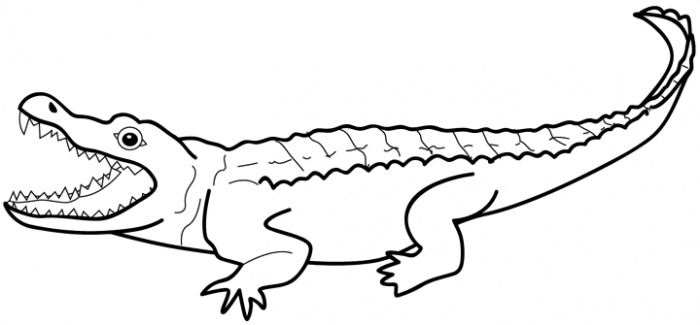 How to draw an alligator easy step by step for beginners video tutorial