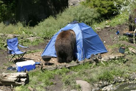 bear-in-tent-2