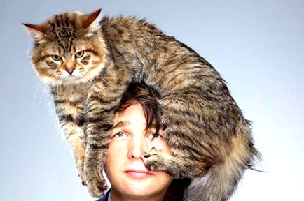 funny-celebrities-with-cat-on-his-head