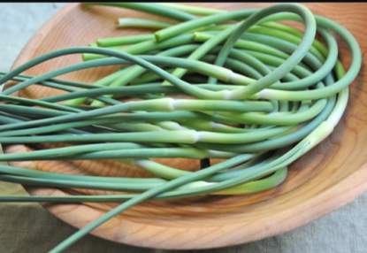 scapes potbelyl