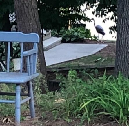 Heron Cropped