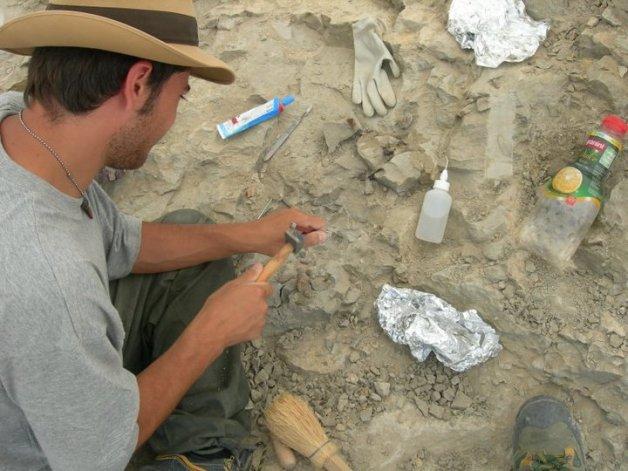 Hadrosaurid bonebed