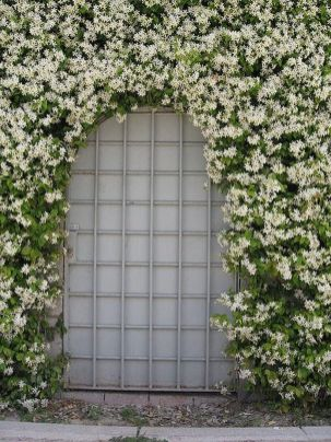 Awesome Fence With Evergreen Plants Landscaping Ideas 107