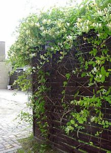 Awesome Fence With Evergreen Plants Landscaping Ideas 112