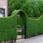 Awesome Fence With Evergreen Plants Landscaping Ideas 28
